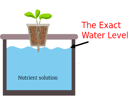 The Exact Water Level of DWC – Hydroponics Space